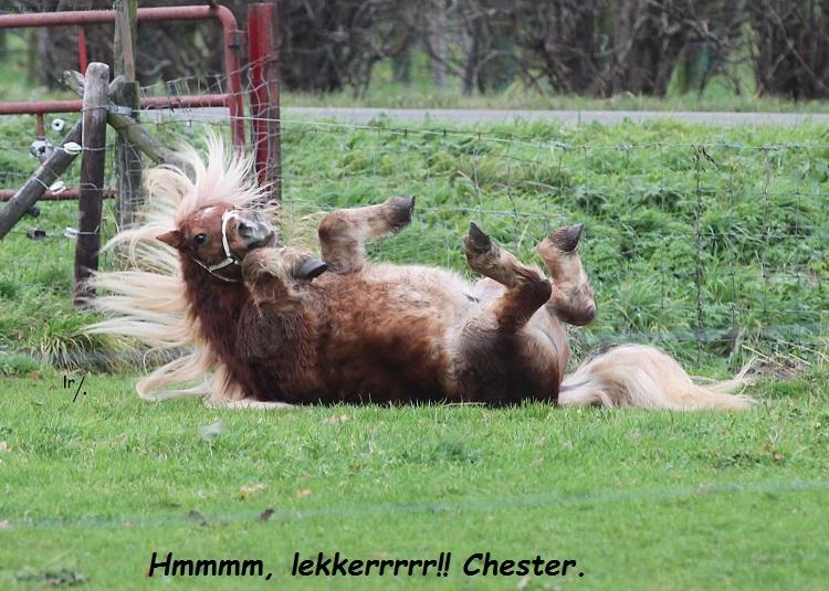Chester Joelle FK5F0854.jpg