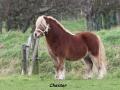Chester Joelle FK5F0715.jpg
