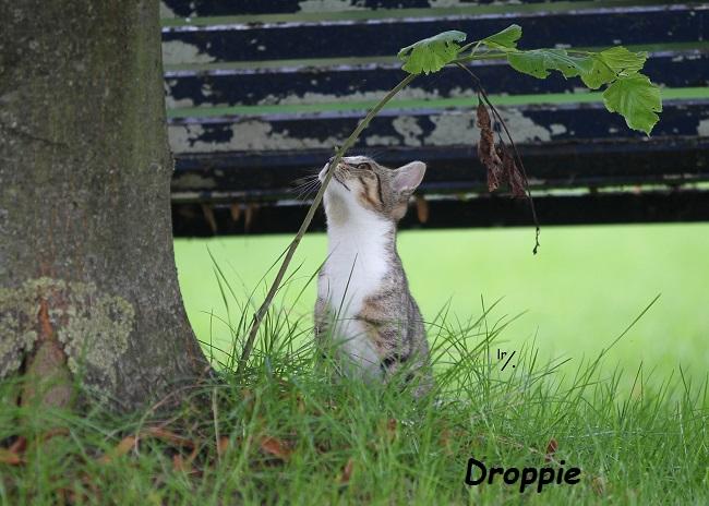 Droppie.jpg