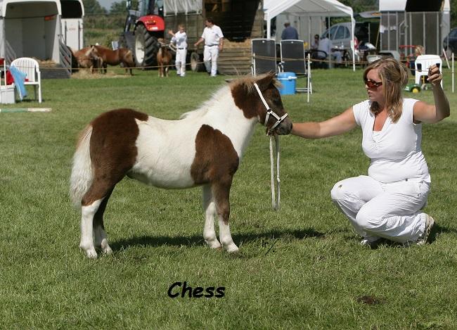 Chess v st v Aschberg OH4L5470.jpg