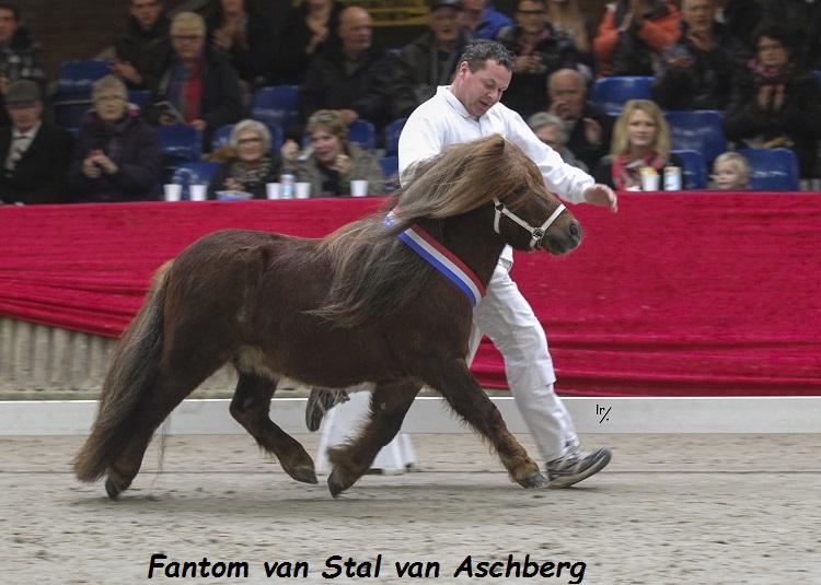 Fantom-van-Stal-van-Aschberg