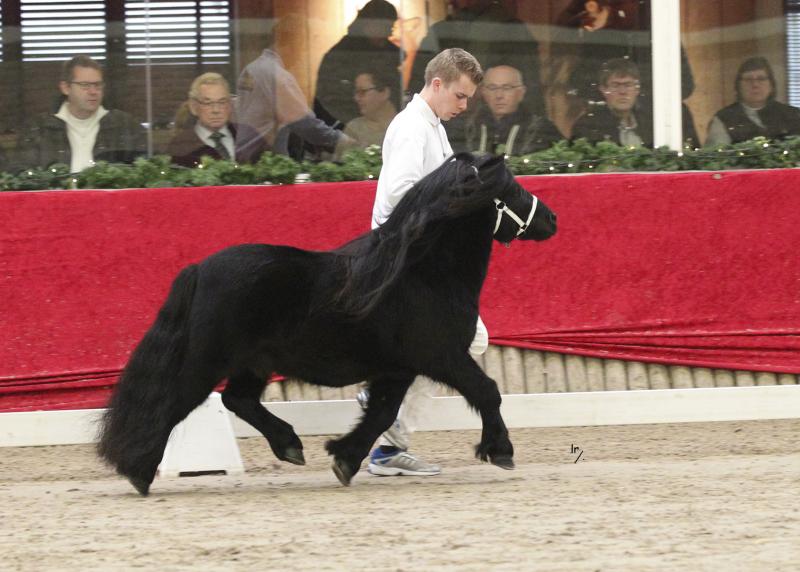paardenkrant Fonseca v St Brammelo FK5F1590