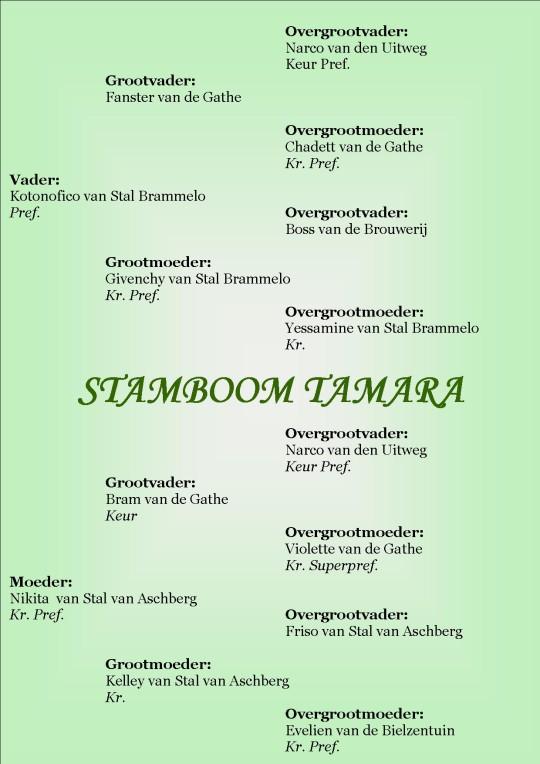 Tamara van Stal van Aschberg