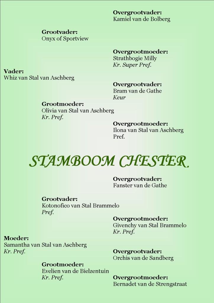 Stamboom Chester